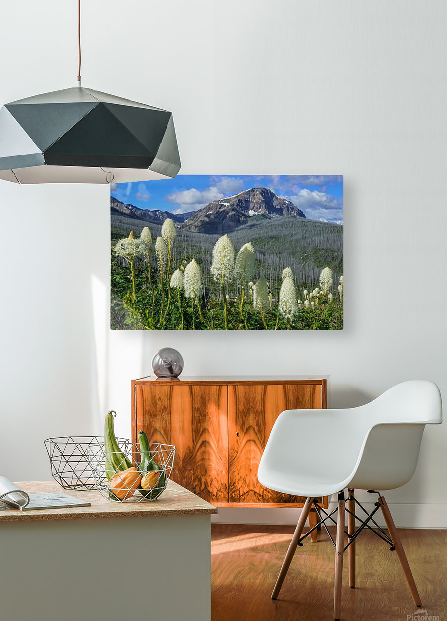 Bear Grass Fields  HD Metal print with Floating Frame on Back