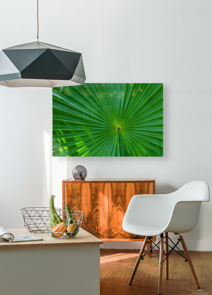 Palm tree detail  HD Metal print with Floating Frame on Back