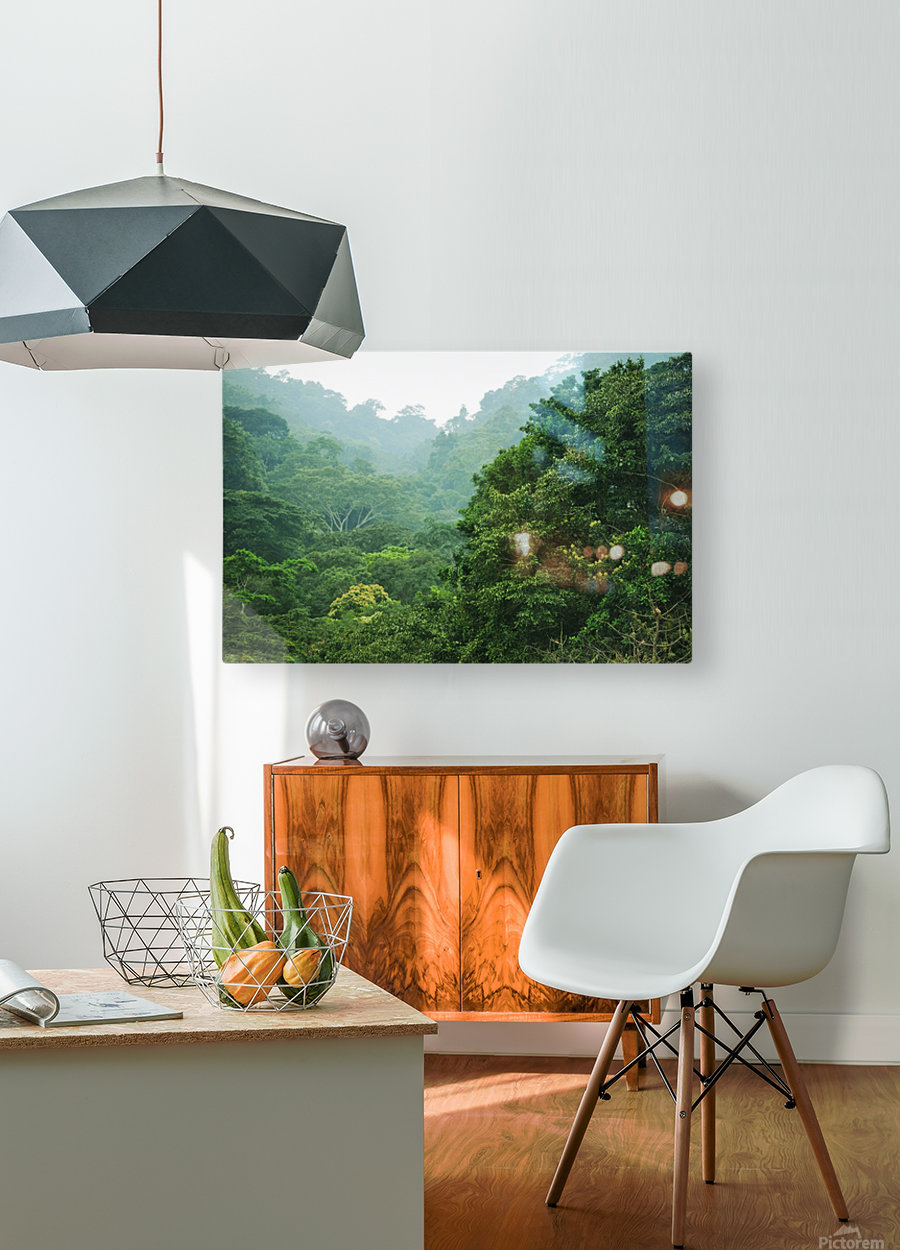 Rainforest Canopy  HD Metal print with Floating Frame on Back