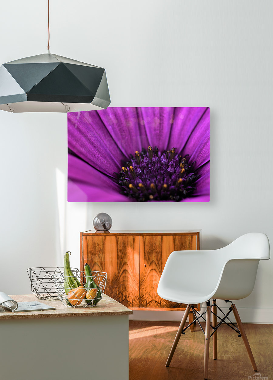 Purple Osteospermum Daisy Photograph Macro  HD Metal print with Floating Frame on Back