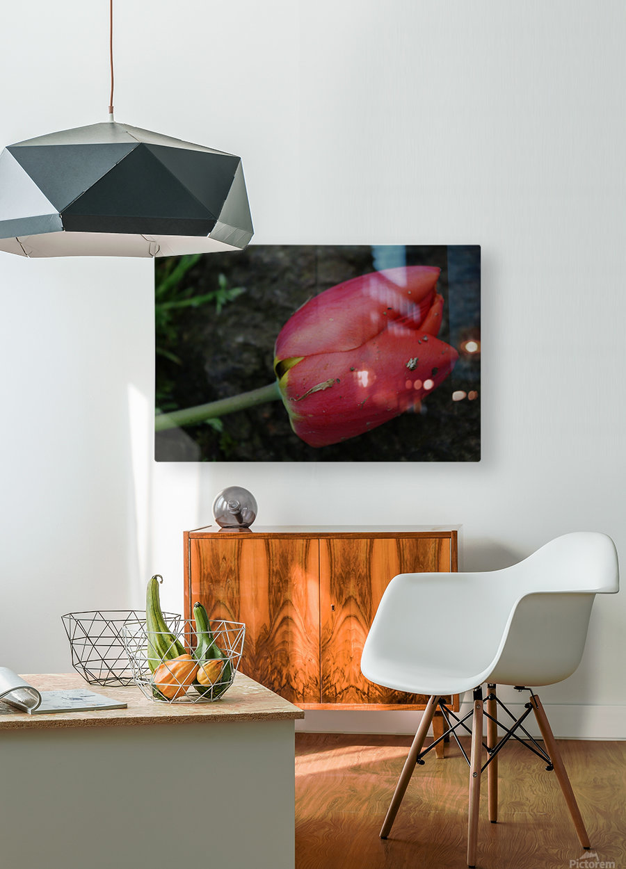 Fallen Beauty 2  HD Metal print with Floating Frame on Back