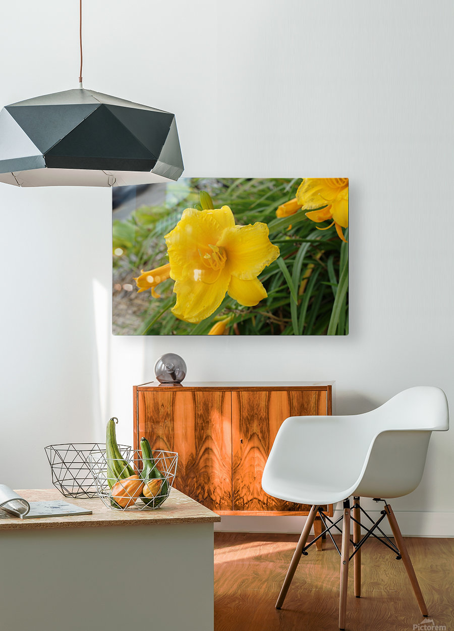Yellow Lilly  HD Metal print with Floating Frame on Back