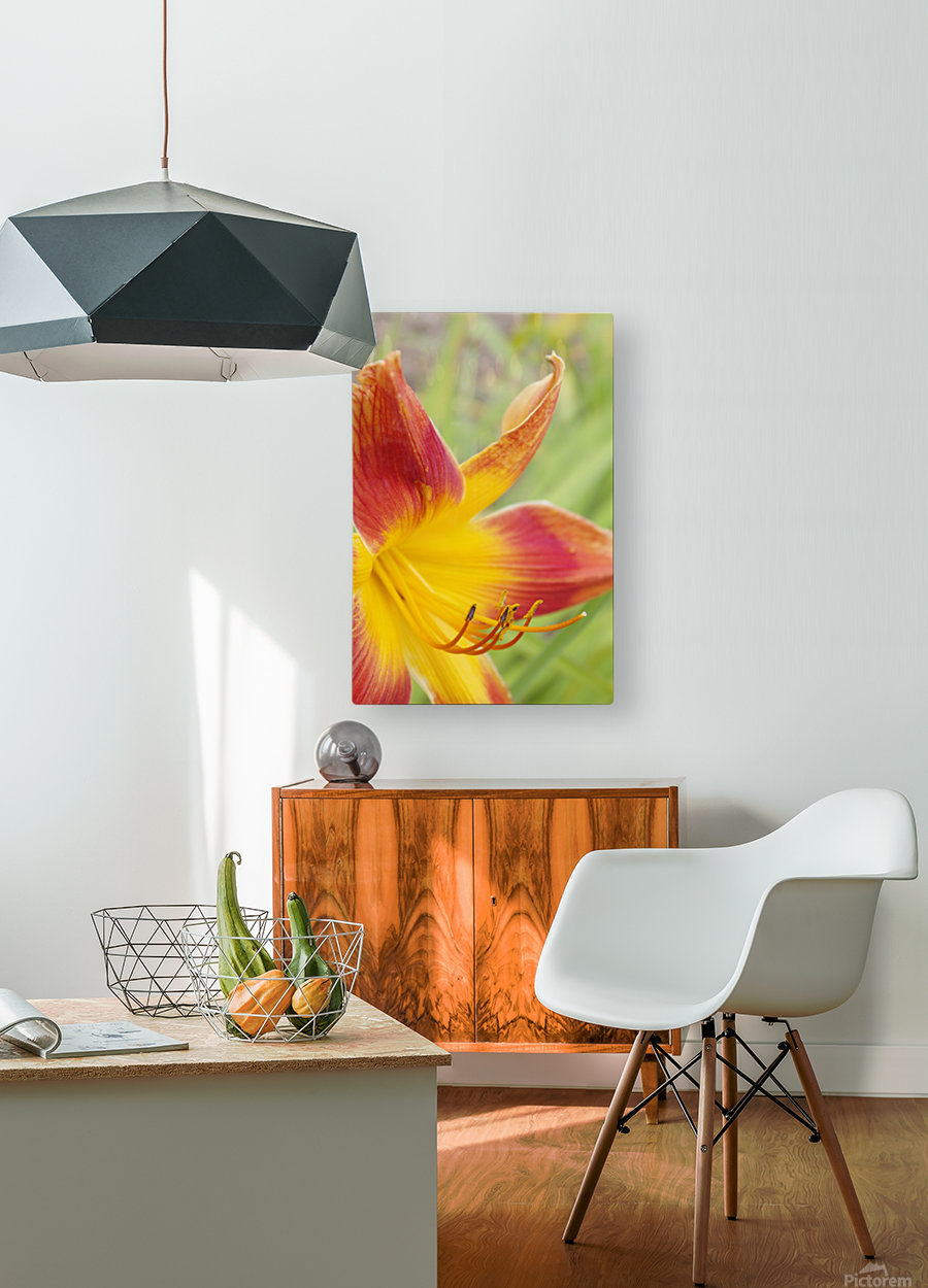 Peach Lilly  HD Metal print with Floating Frame on Back