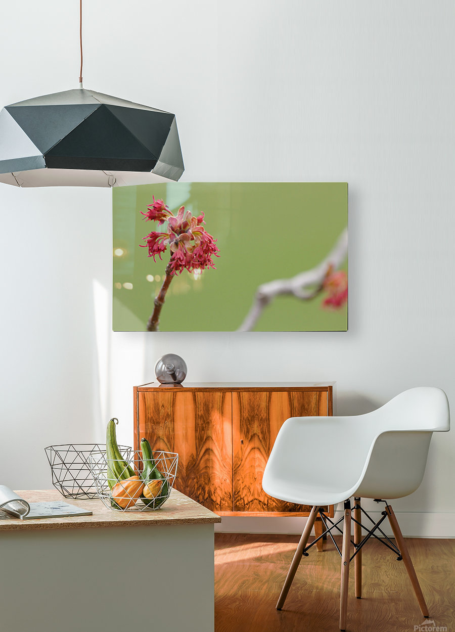 Blooming 2  HD Metal print with Floating Frame on Back
