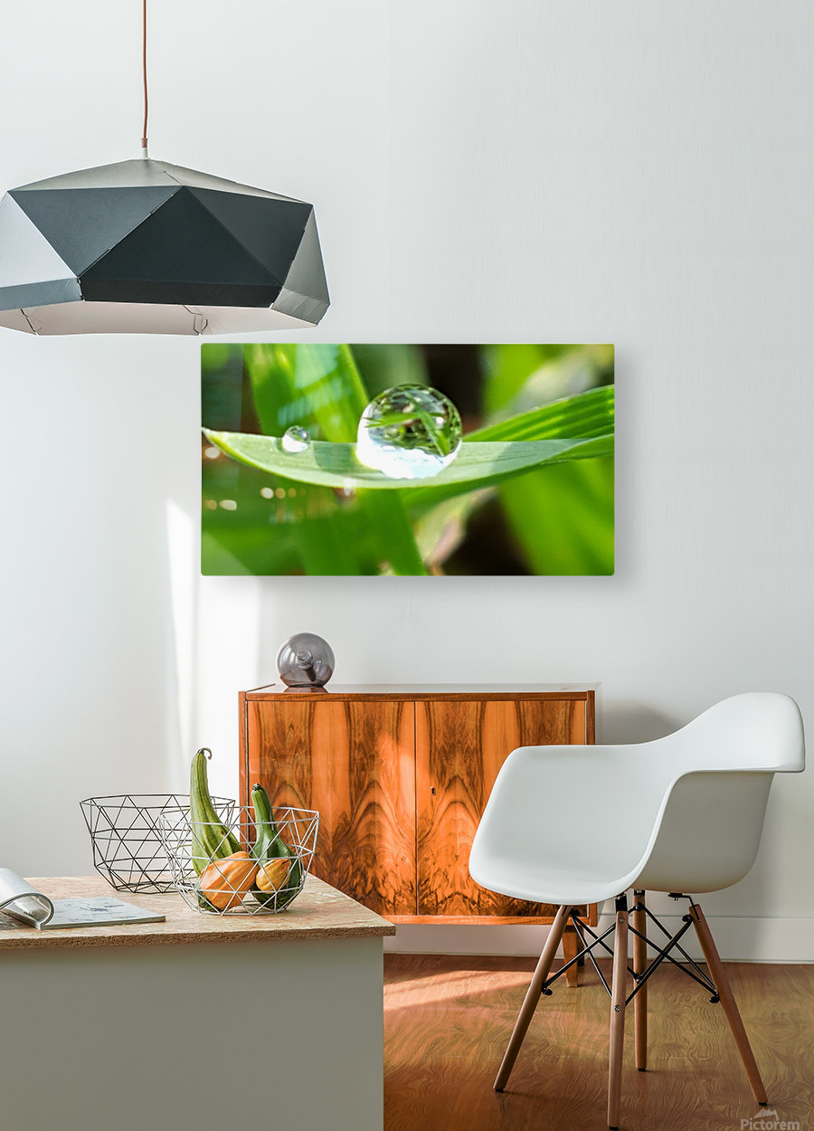 Dew Drops  HD Metal print with Floating Frame on Back