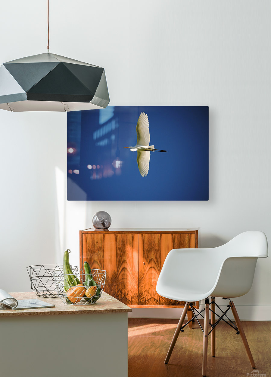 Egret Sailing Above  HD Metal print with Floating Frame on Back