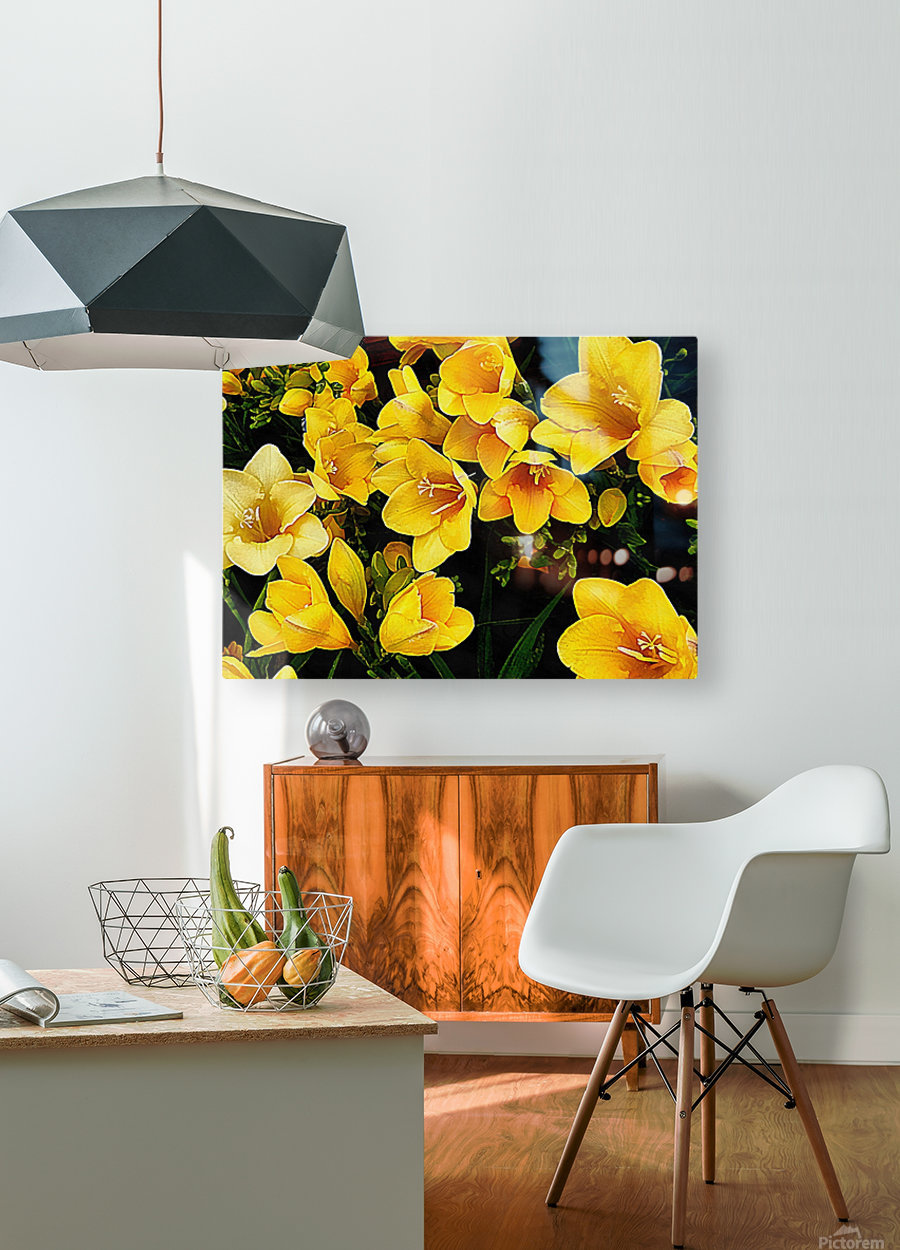 Yellow Freesias  HD Metal print with Floating Frame on Back
