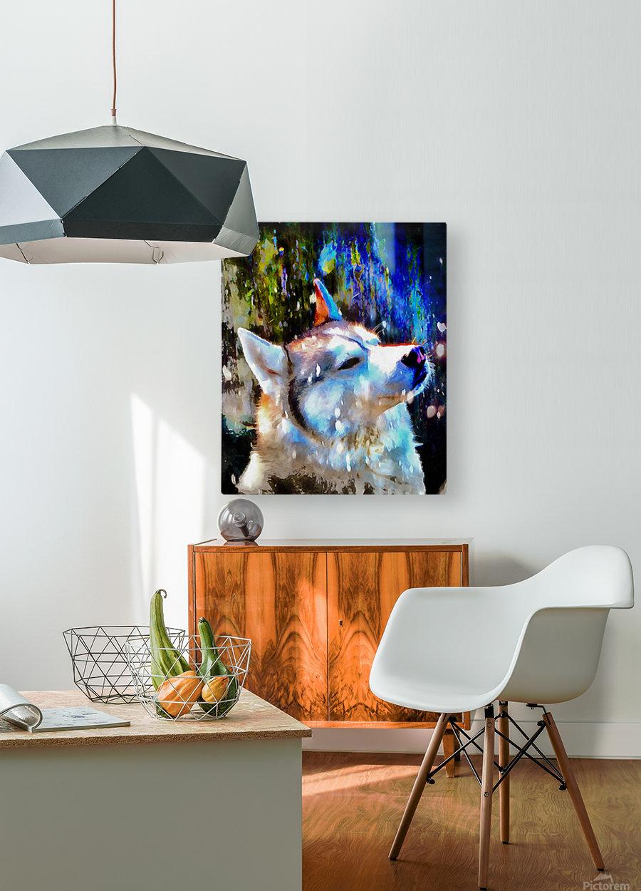 Husky Enjoying the Snow  HD Metal print with Floating Frame on Back