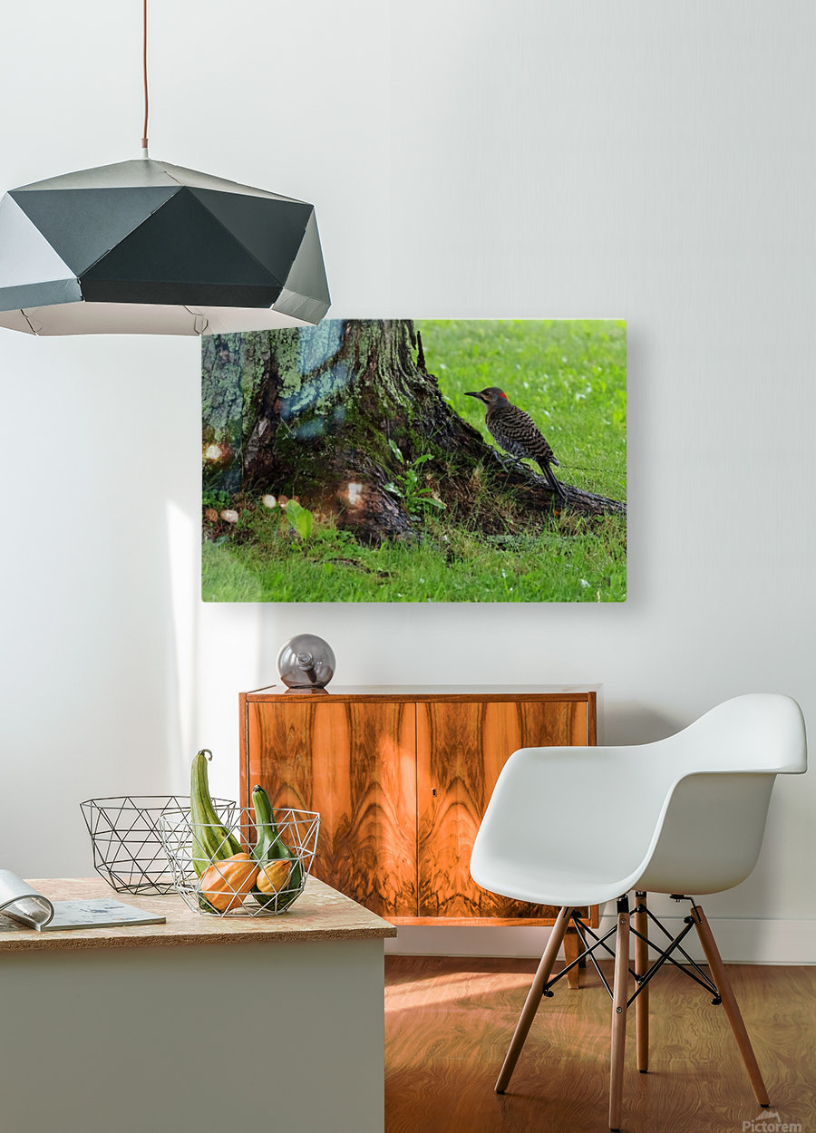 Pic flamboyant   HD Metal print with Floating Frame on Back