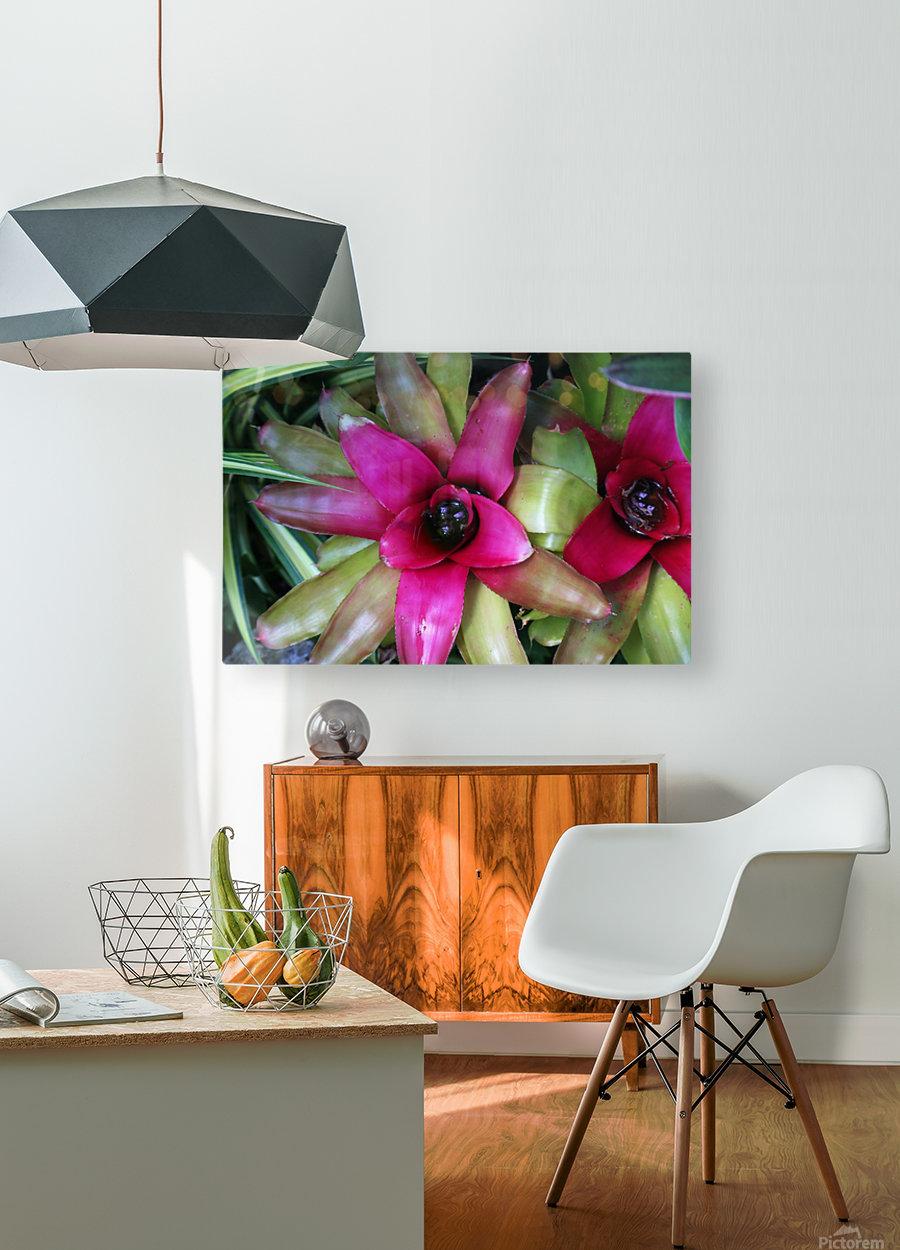 Bromeliad  HD Metal print with Floating Frame on Back