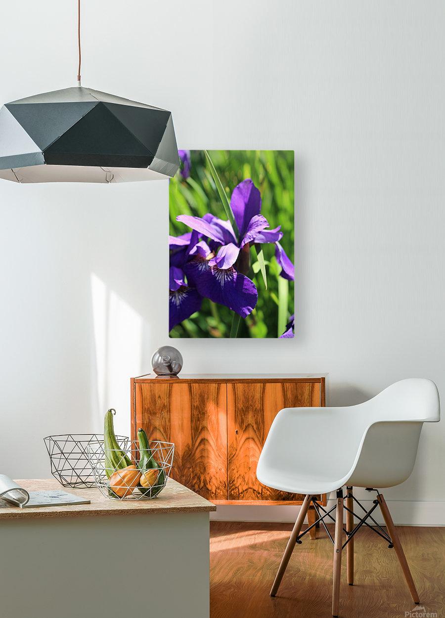 Purple Iris  Impression métal HD avec cadre flottant sur le dos
