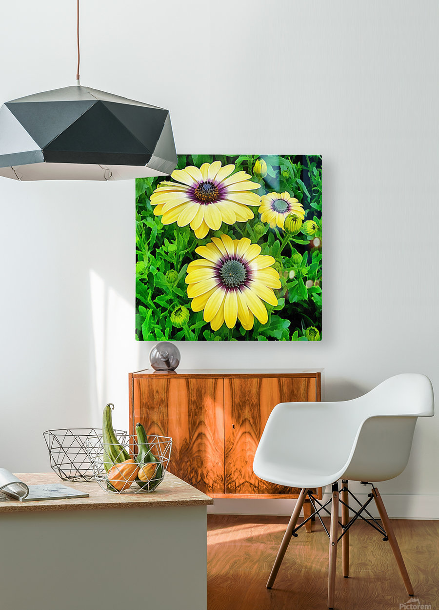 Osteospermum Serenity Blue  HD Metal print with Floating Frame on Back