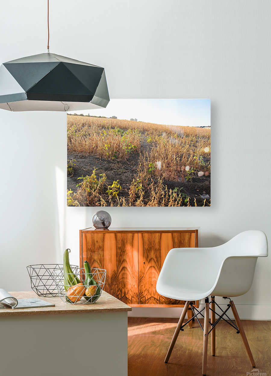 Landscape Photograph (120)  HD Metal print with Floating Frame on Back