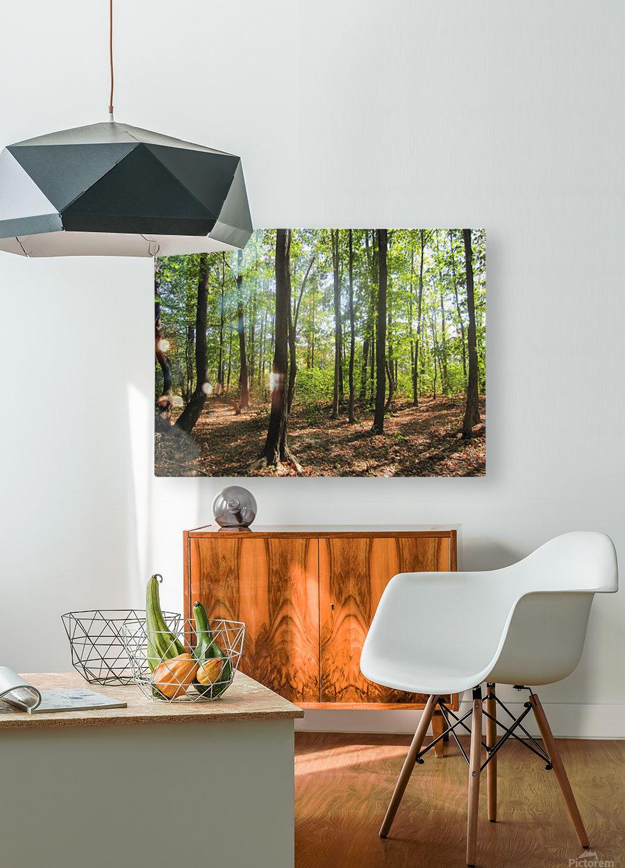 Landscape (51)  HD Metal print with Floating Frame on Back