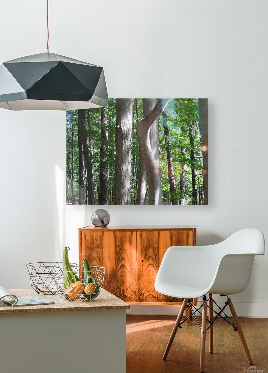 Landscape (267)  HD Metal print with Floating Frame on Back