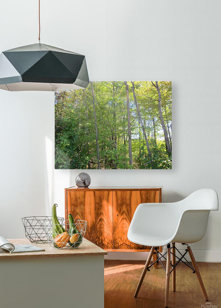 Landscape (288)  HD Metal print with Floating Frame on Back