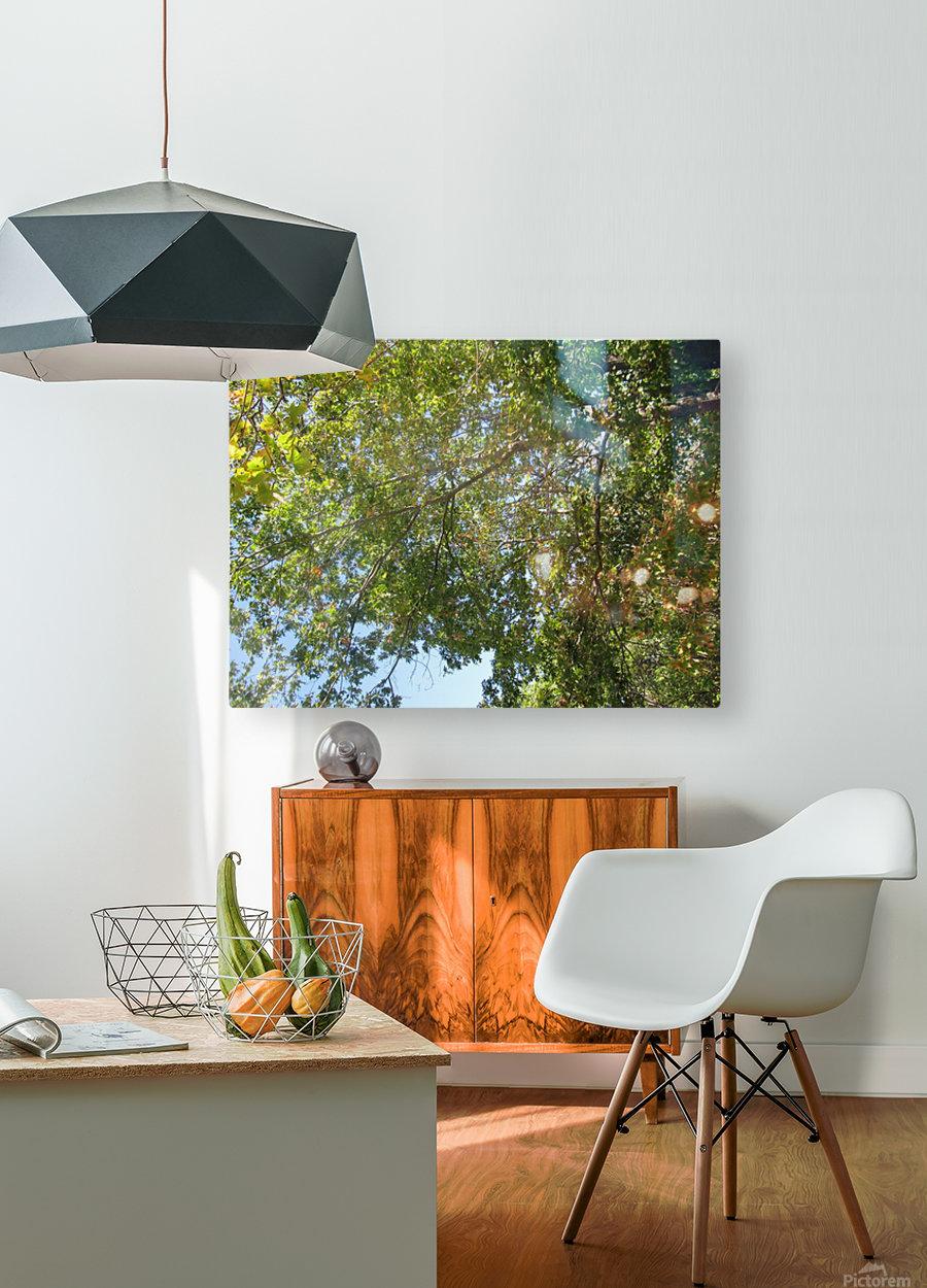 Landscape (302)  HD Metal print with Floating Frame on Back