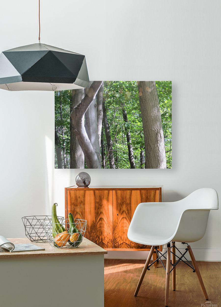 Landscape (266)  HD Metal print with Floating Frame on Back