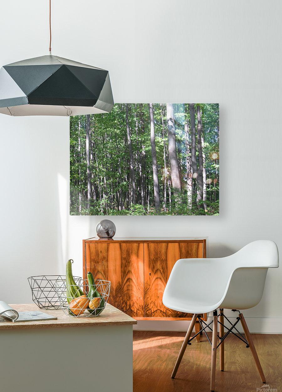 Landscape (87)  HD Metal print with Floating Frame on Back