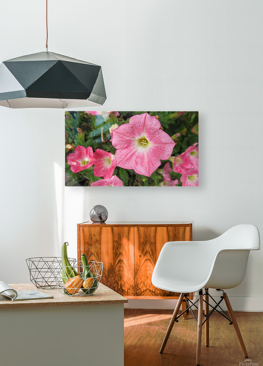 Flowers (86)  HD Metal print with Floating Frame on Back