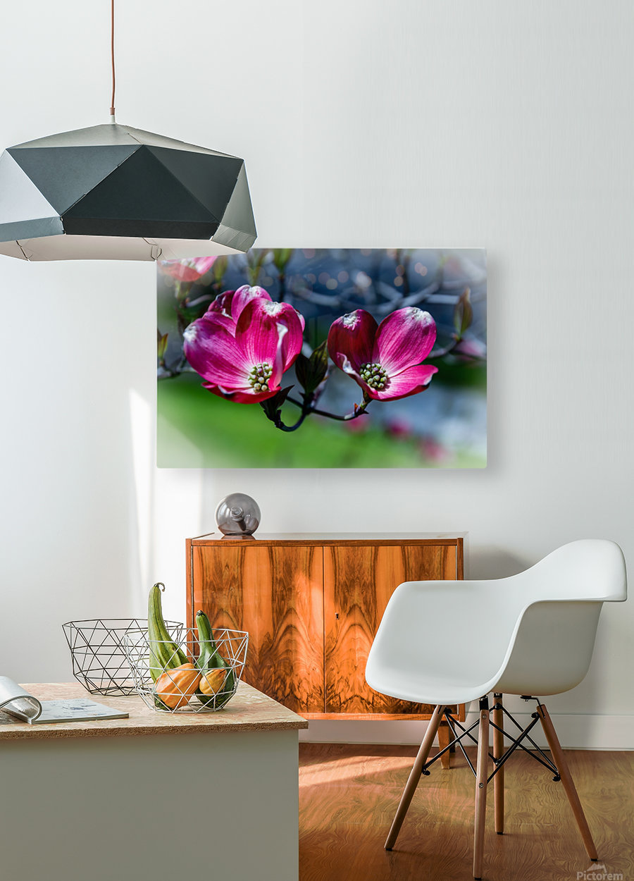 Dogwood 2  HD Metal print with Floating Frame on Back