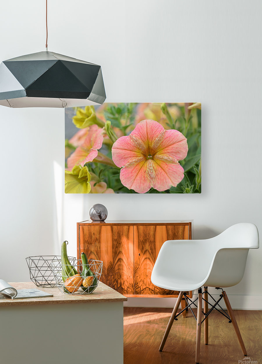 Orange Flowers Photograph  HD Metal print with Floating Frame on Back