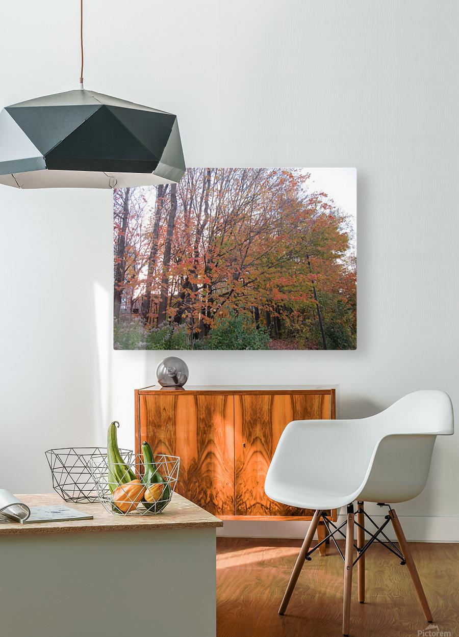 Fall Season (11)  HD Metal print with Floating Frame on Back