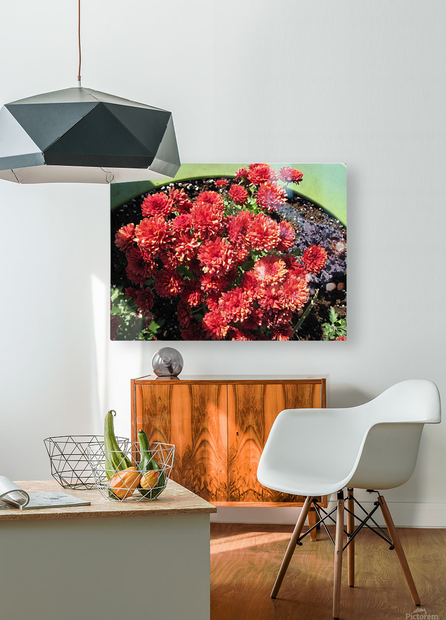 Flower (4)  HD Metal print with Floating Frame on Back