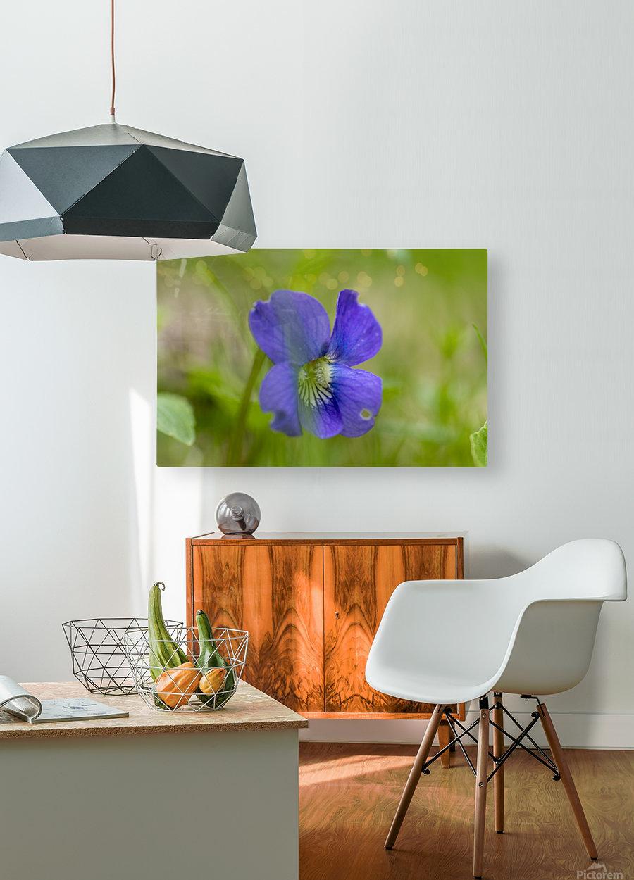 Wild Violet  HD Metal print with Floating Frame on Back