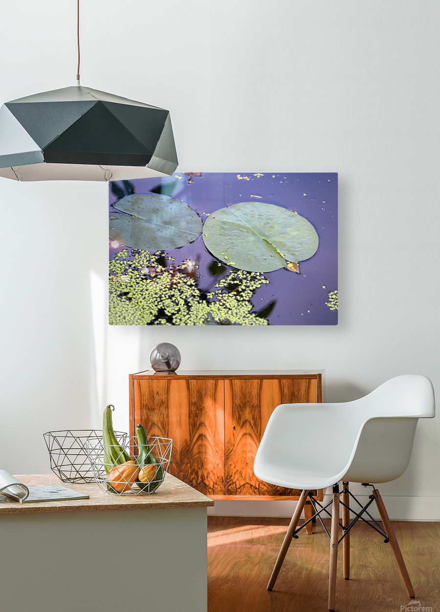 Lily Pads and Duckweed Dow Gardens 2018  HD Metal print with Floating Frame on Back