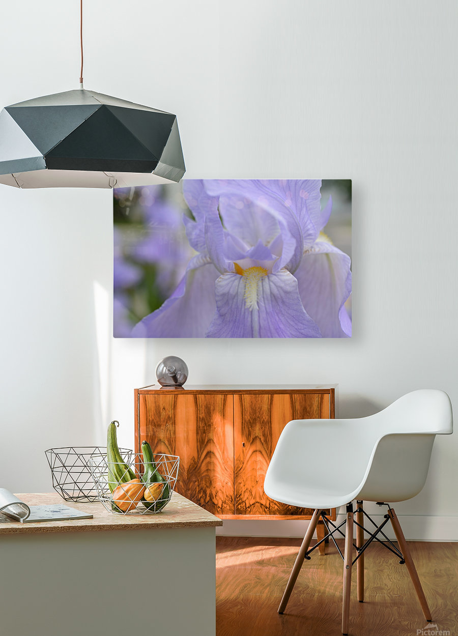 Pale Blue Iris Photograph  HD Metal print with Floating Frame on Back