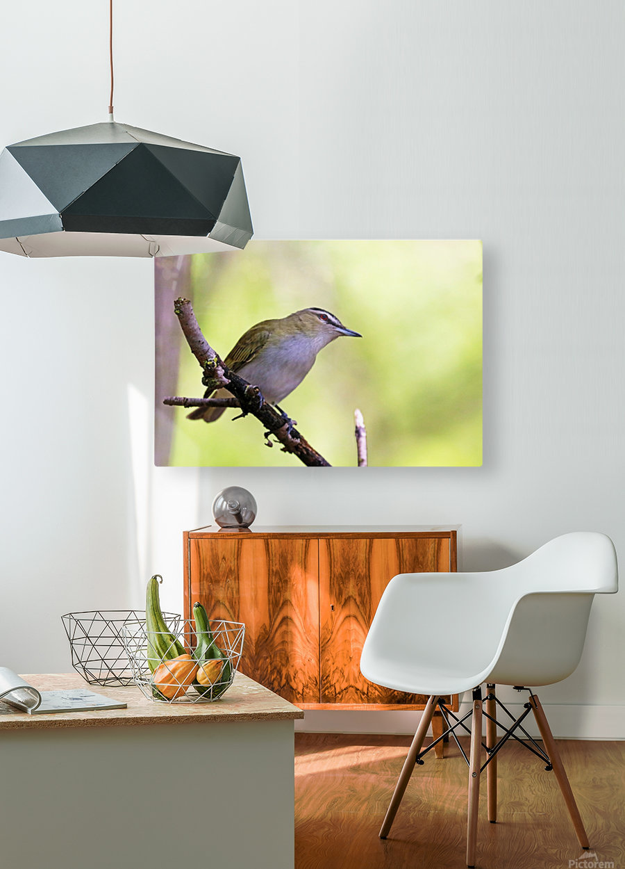 The Tireless Songster  HD Metal print with Floating Frame on Back