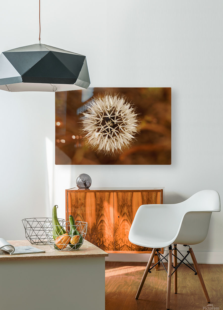 Silver Puff  HD Metal print with Floating Frame on Back