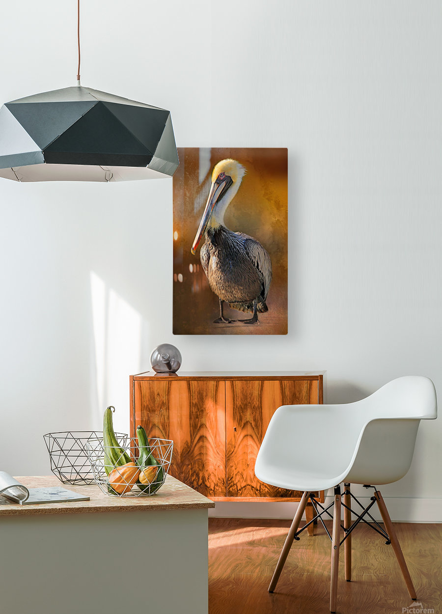 Brown Pelican Portrait  HD Metal print with Floating Frame on Back