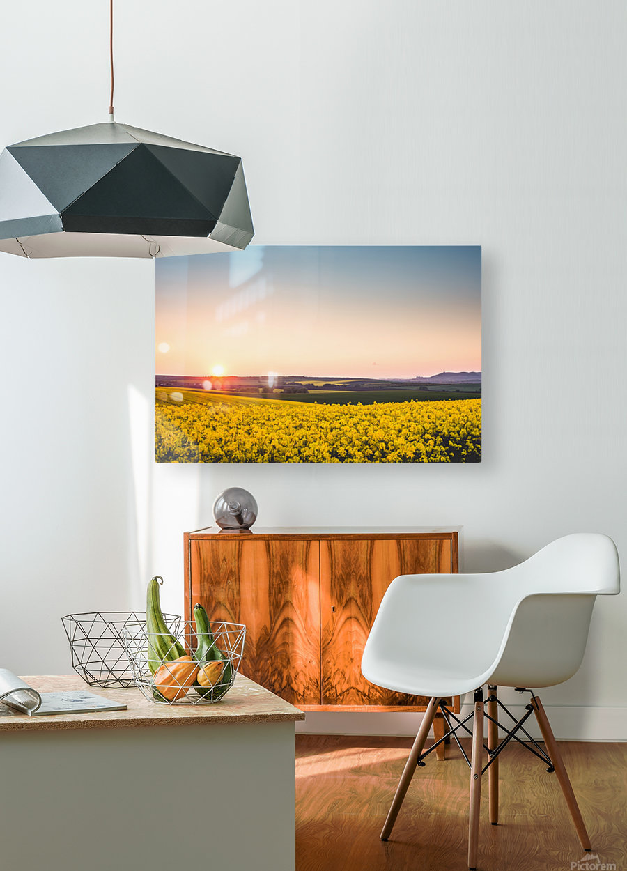 Beautiful sunset over the yellow rapeseed field.  HD Metal print with Floating Frame on Back