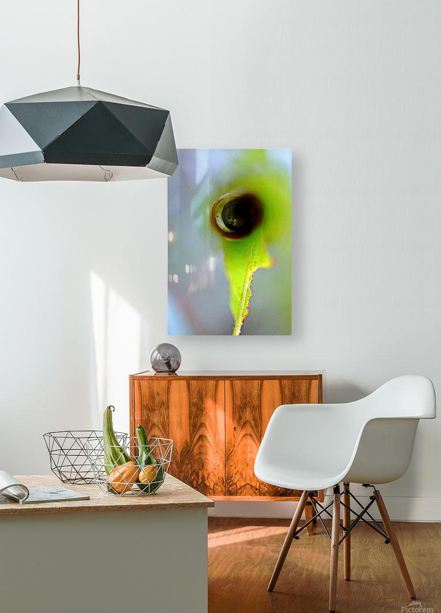 Curled Leaf 03  HD Metal print with Floating Frame on Back
