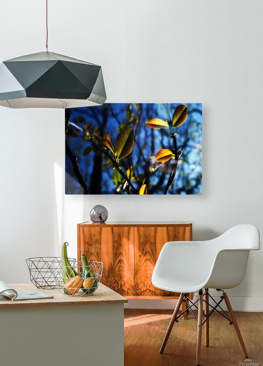 Pop Color Summer Flowers  HD Metal print with Floating Frame on Back