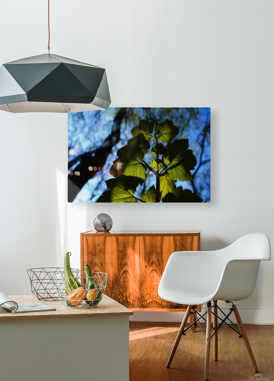 Leaves in the Summer  HD Metal print with Floating Frame on Back