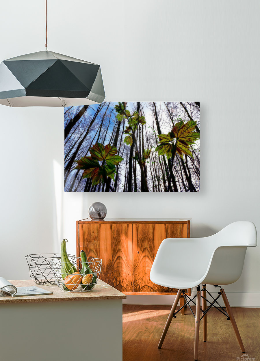 Green and Colourful Nature Scene  HD Metal print with Floating Frame on Back