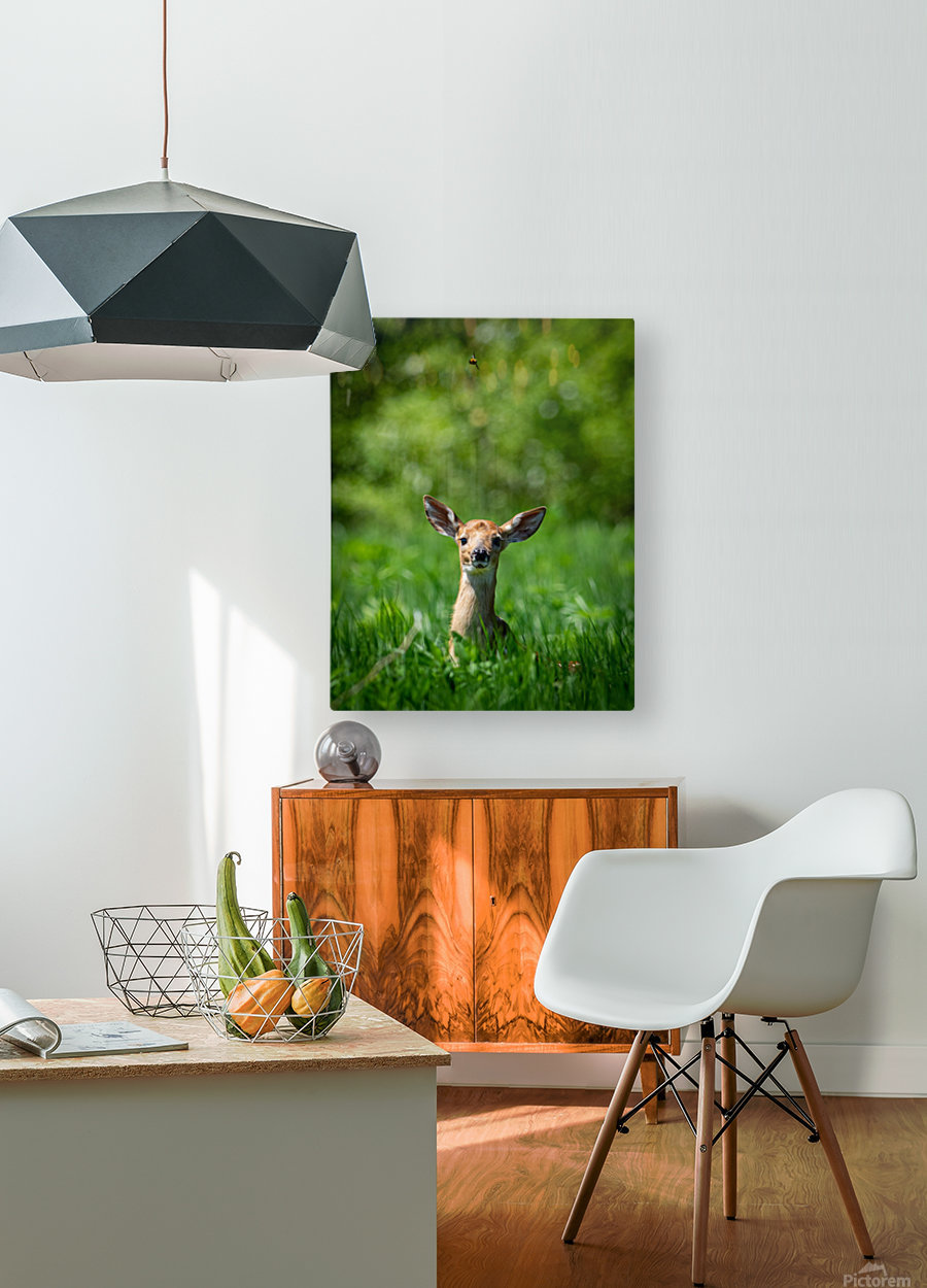 The Fawn and the Bumblebee  HD Metal print with Floating Frame on Back