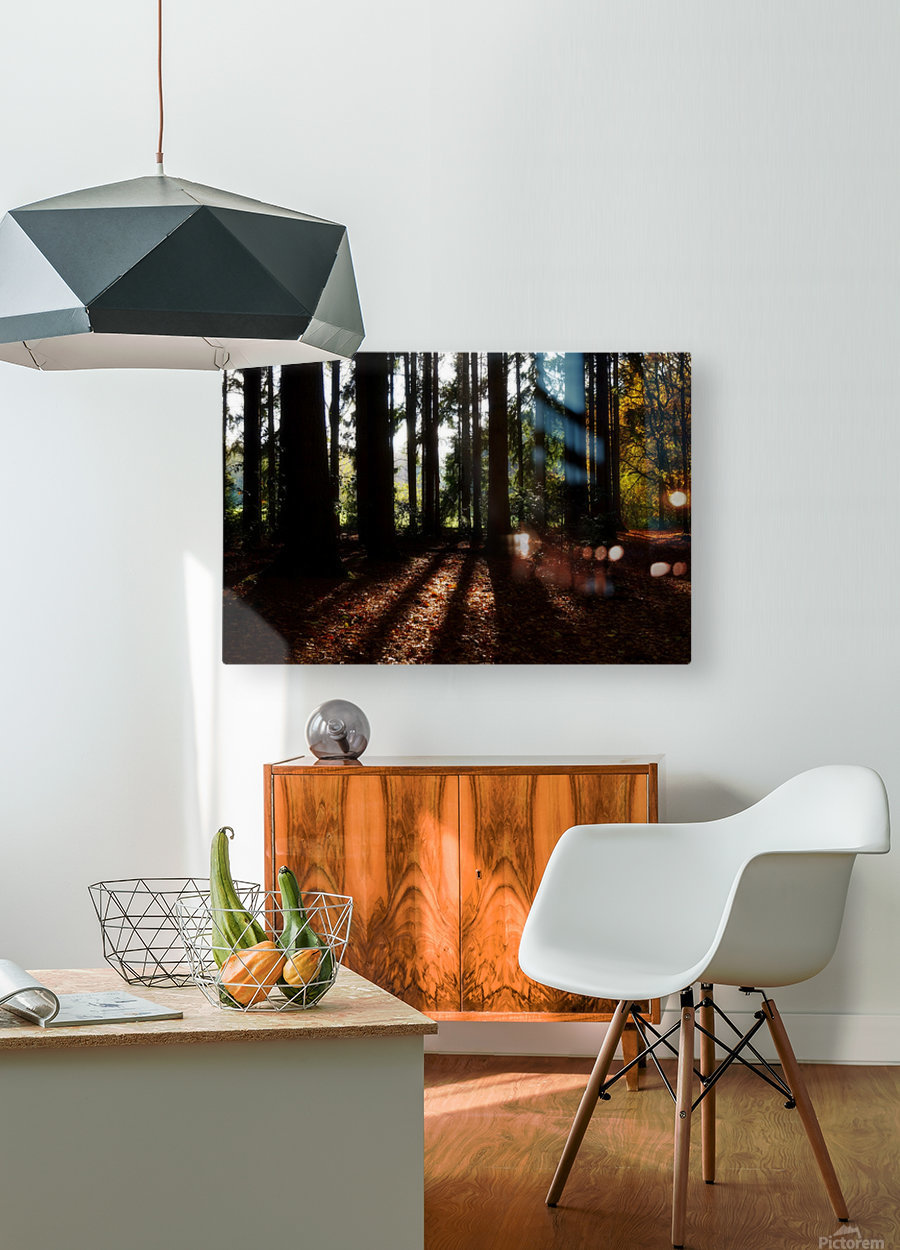 Fantasy Forest 04  HD Metal print with Floating Frame on Back