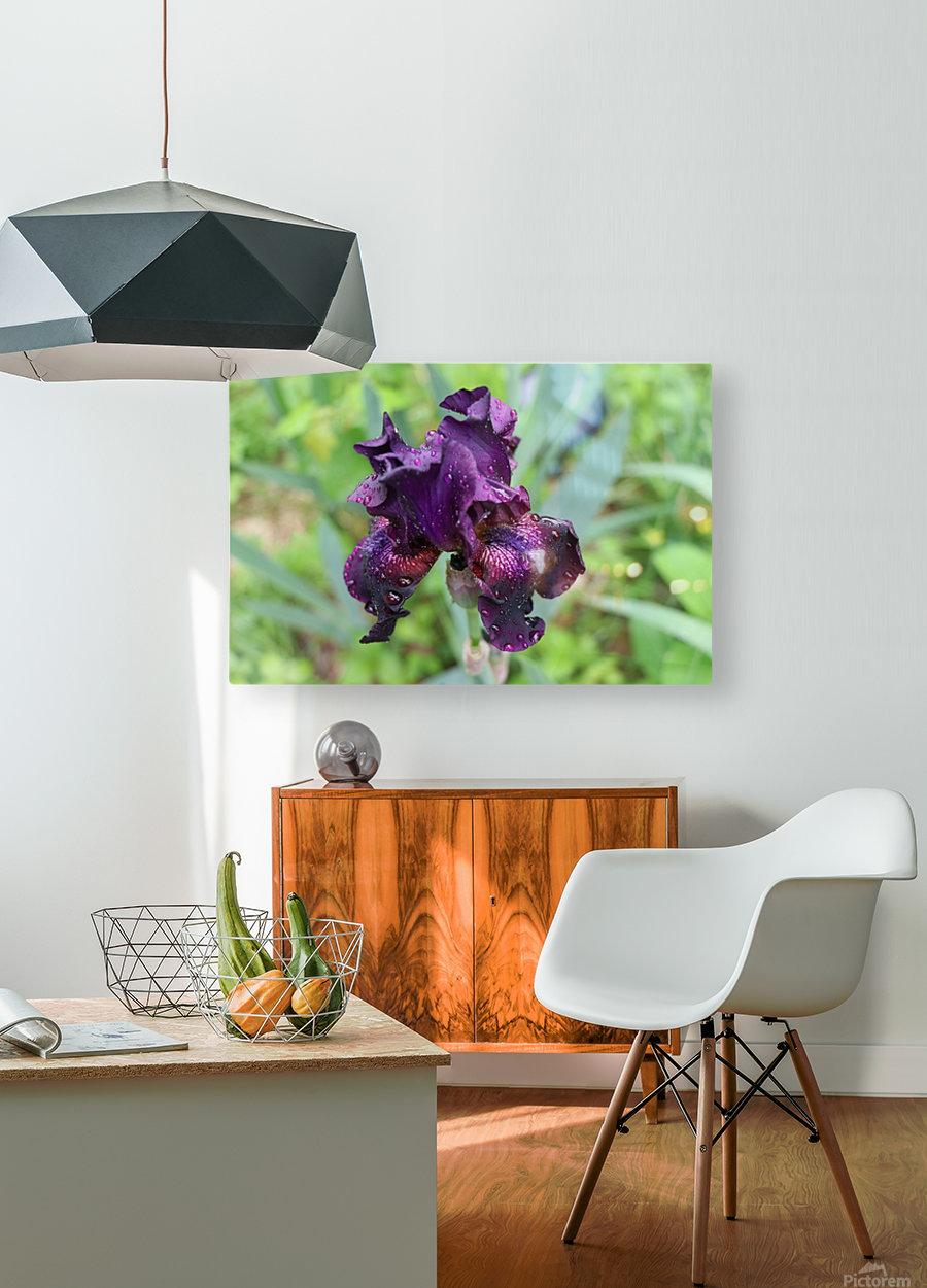 Purple Iris  HD Metal print with Floating Frame on Back