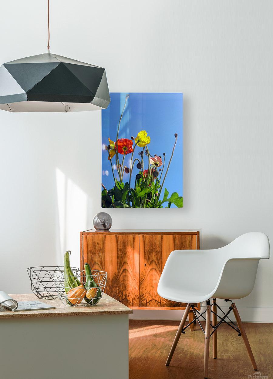Spring Sky Garden  HD Metal print with Floating Frame on Back
