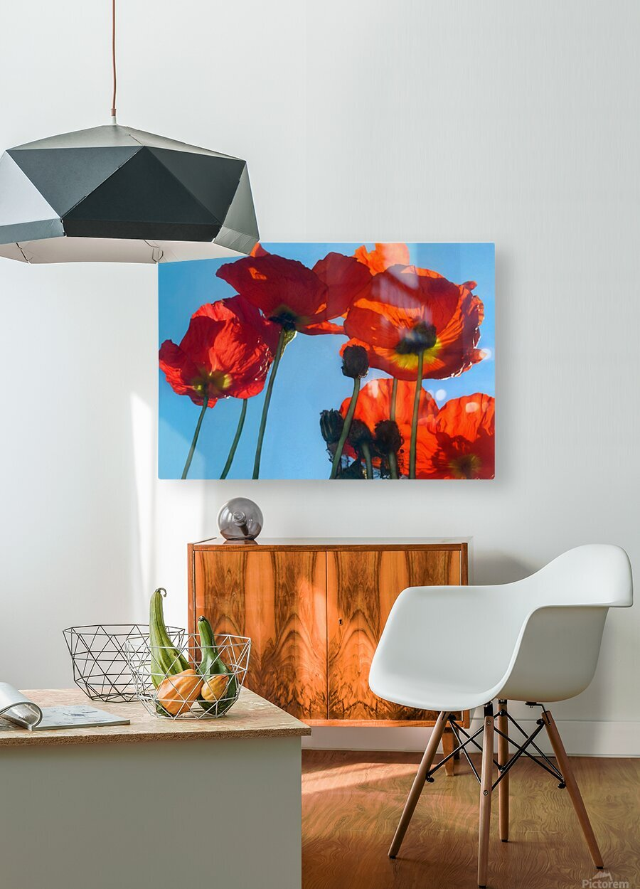 Poppies in the Sky  HD Metal print with Floating Frame on Back