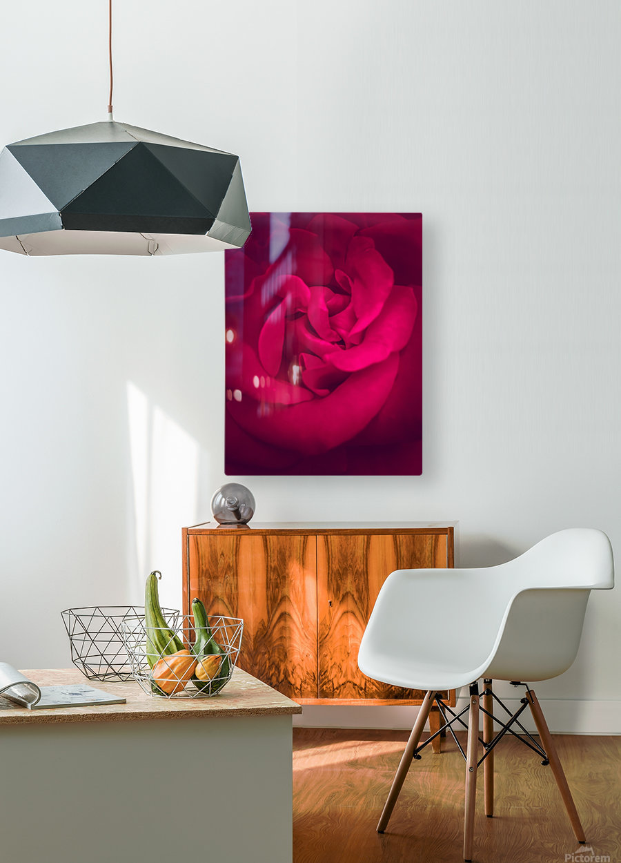red rose background  HD Metal print with Floating Frame on Back