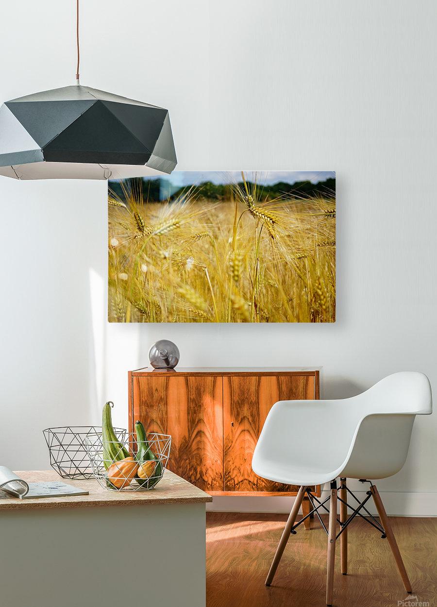 Corn Cob Landscape 06  HD Metal print with Floating Frame on Back