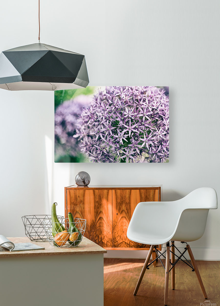 Allium in Bloom  HD Metal print with Floating Frame on Back