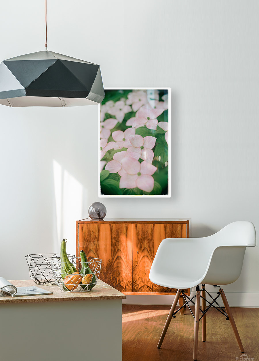 Sea of Pink  HD Metal print with Floating Frame on Back
