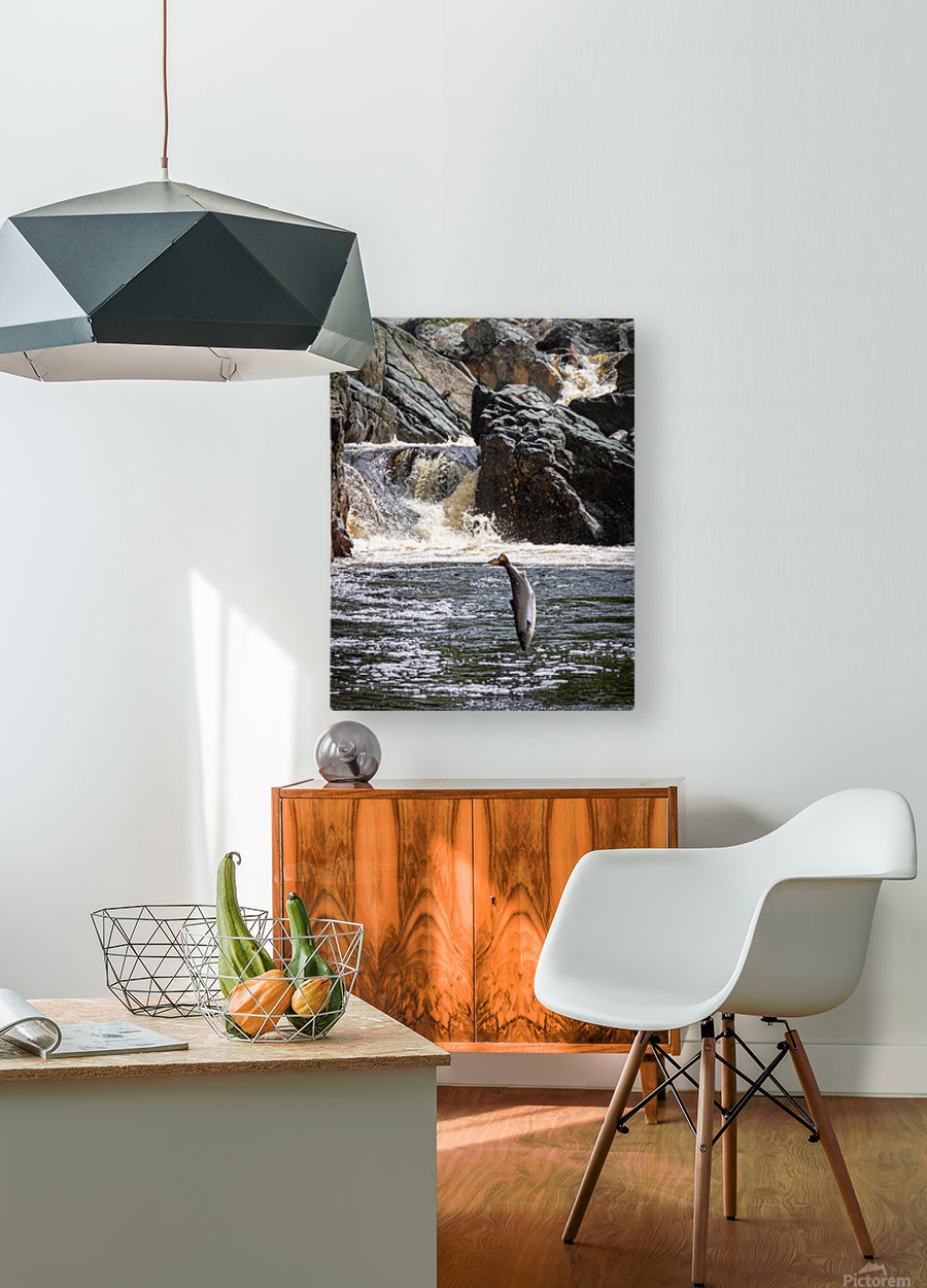 Leaping Silver   HD Metal print with Floating Frame on Back
