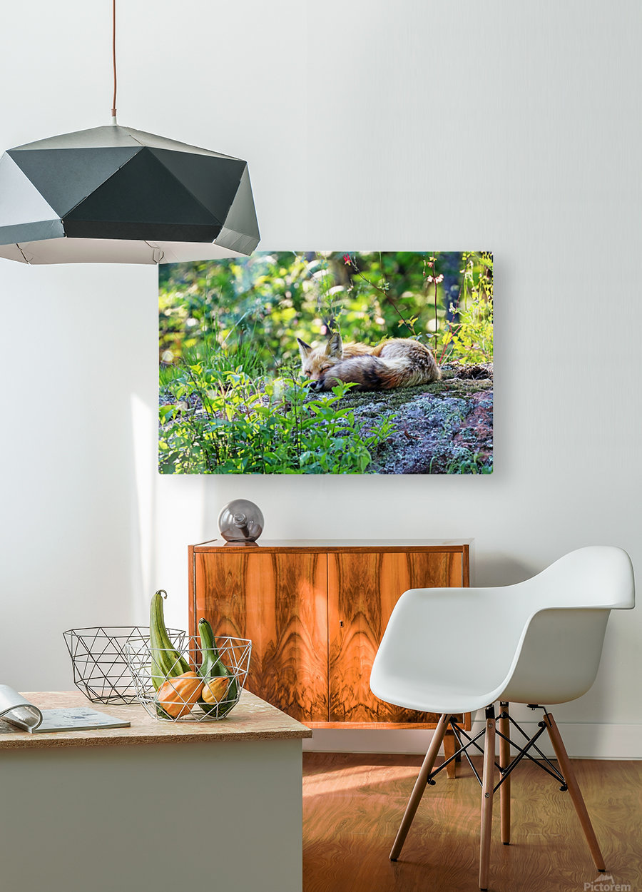 Nap Time For Red Fox I  HD Metal print with Floating Frame on Back